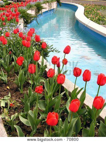 Tulipanes rojos al lado de agua azul