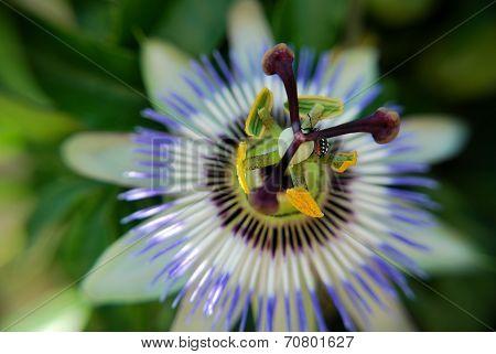 Unusual garden flower