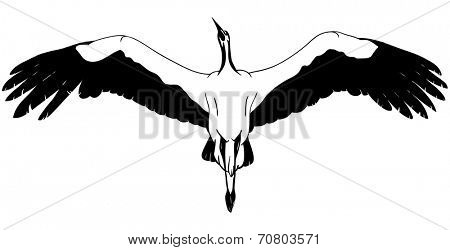 vector - Flying White Stork - isolated on background
