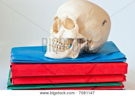Skull Organizer