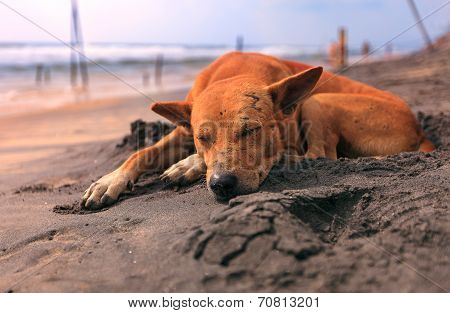 Stray dog sleeping on the beach