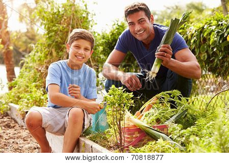 Father And Son Working On Allotment Together