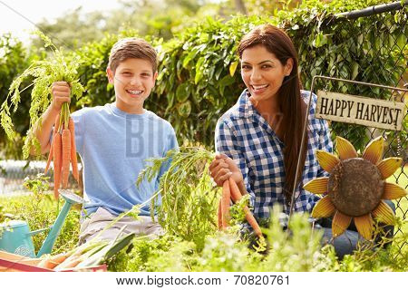 Mother And Son Working On Allotment Together