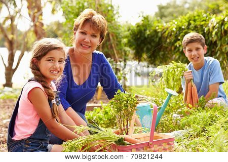 Grandmother With Grandchildren Working On Allotment