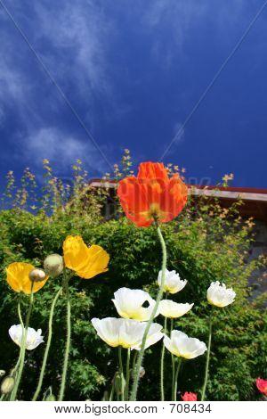 Napa Flowers