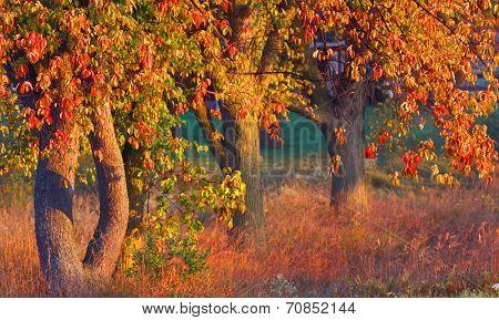 Bright autumn trees in morning sun light