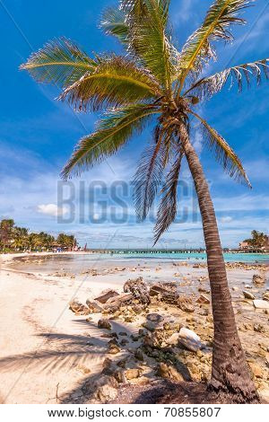 tropical sea, palm and beach in Isla Mujeres, Mexico