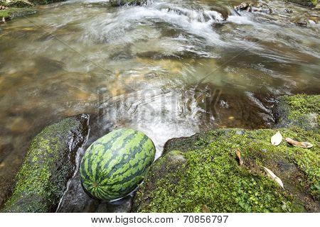 Watermelon in gentle stream