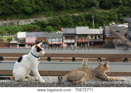 Tortoiseshell cat sitting and tabby cat lying on the stone wall in the cat village of Houtong, Taiwan.