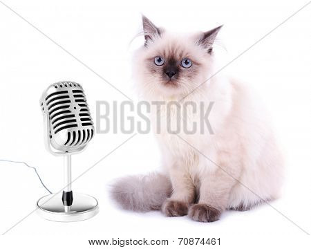 Beautiful cat with microphone isolated on white