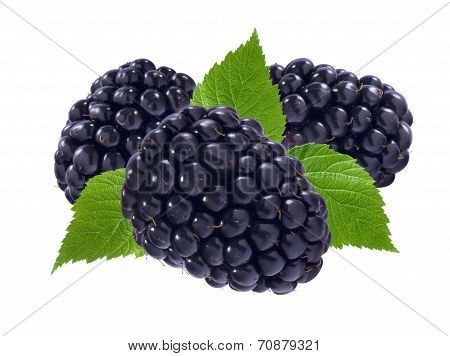 Three black berries And Leaves Isolated On White
