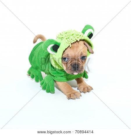 Frogger Puppy