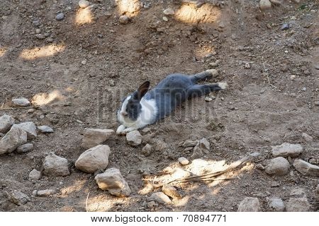 Rabbit Laying On The Ground Photo