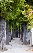 image of passy  - The historic Passy Cemetery in Paris France - JPG