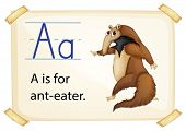 foto of ant-eater  - Illustration of a flashcard with letter A - JPG