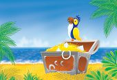 picture of palm cockatoo  - Pirate parrot sits on a treasure chest that stands on a tropical beach - JPG