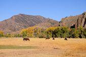 picture of prairie  - Horses grazing in prairies in Wyoming - JPG