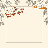 foto of rowan berry  - Decorative card with branch of rowan - JPG