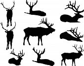 picture of animal silhouette  - The Elk Silhouettes includes nine individual animal graphics - JPG