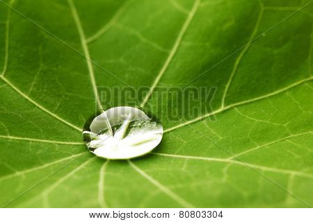 Water drop on green Nasturtium leaf macro