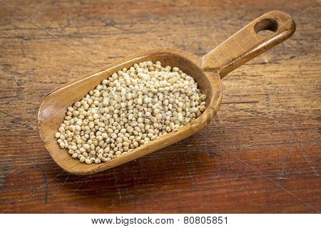 a scoop of gluten free white sorghum grain against grunge wood