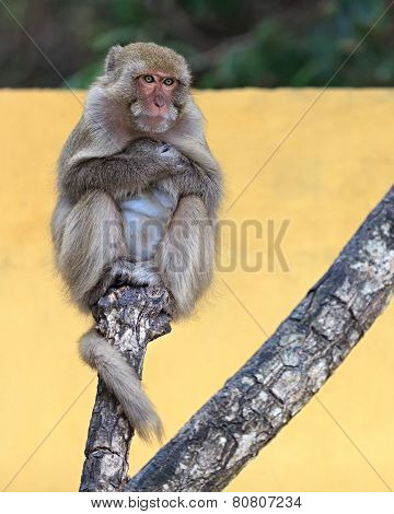 Monkey portrait on a tree