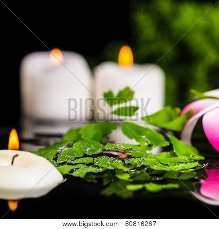 Spa Background Of Green Branch Fern, Plumeria Flower With Drops And Candles On Zen Basalt Stones In