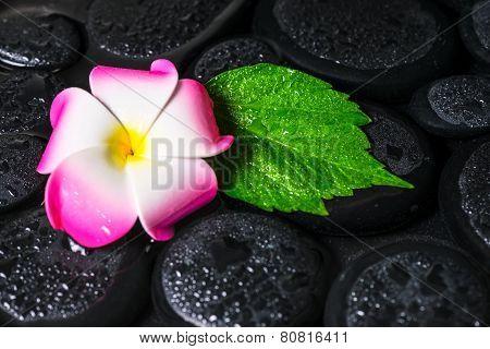 Spa Concept Of Green Leaf Hibiscus, Plumeria On Zen Basalt Stones With Drops In Water, Closeup