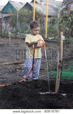 Boy Watering Seedling