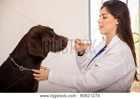 Giving Medicine To A Dog