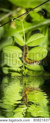 hairy yellow and black caterpillar among green leaves