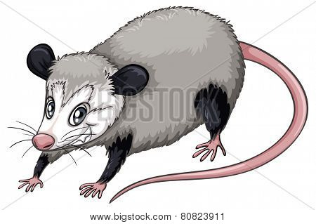 Illustration of a  close up opossum