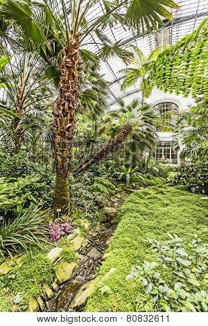 Palms Inside The Palmengarten