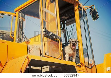 Curly Brown Dog Jumping Stands At The Construction Machine