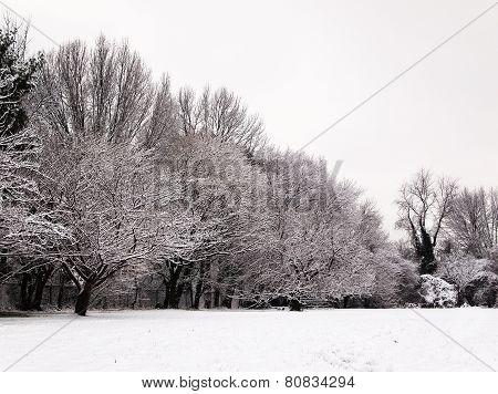 Snow Winter Landscape - High Contrast