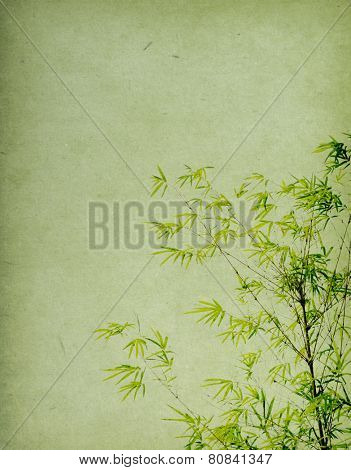 Old paper texture with bamboo