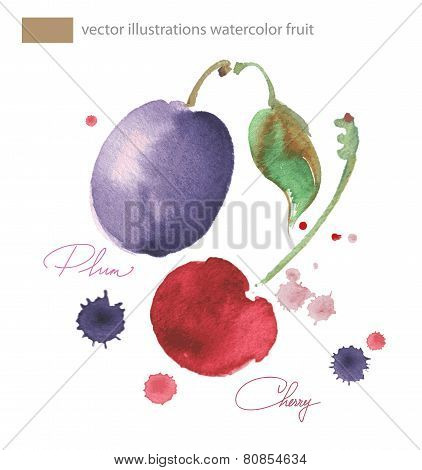 Vector Watercolor Image Cherrie And Plu  With Splashes