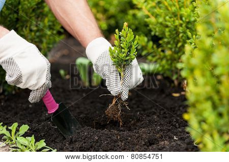 Planting A Seedling.