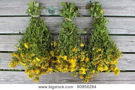 Herb St. John's Wort Tied In Bunches For Drying.