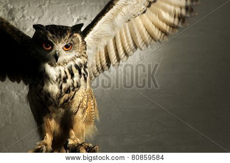 MENACING EAGLE OWL