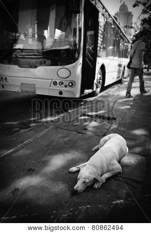 Dog sleeping on the sidewalk