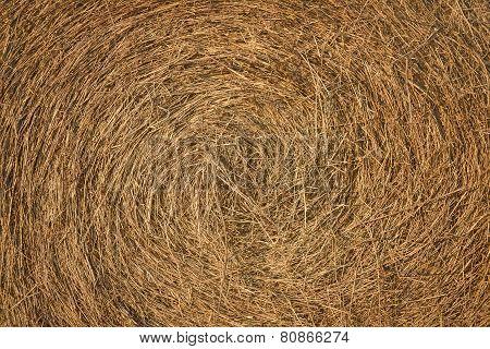 Dry Hay Texture