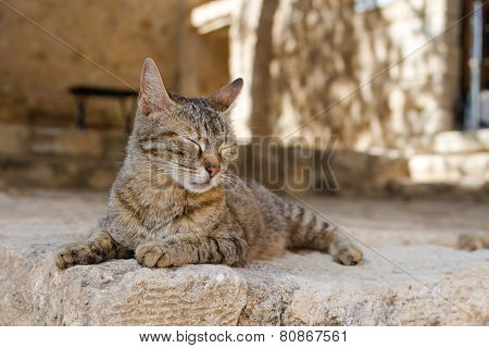 Cat basking in the sun in Greece