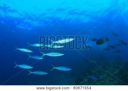 Fish school underwater