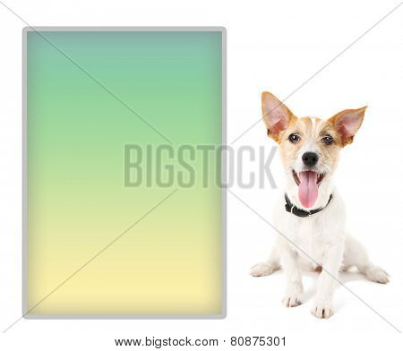 Jack Russell terrier with place for text, isolated on white