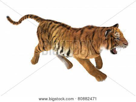 Trotting Tiger