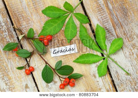 Gracias card (which means thank you in Spanish) with two green leaves and rowan berries on rustic wo