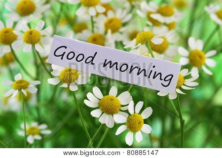Good morning card with chamomile flowers