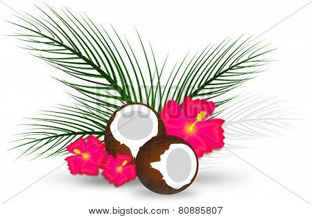 Coconut With Palms Leaves And Hibiscus
