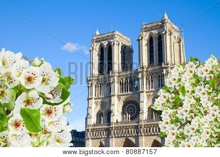 facade of Notre Dame cathedral, Paris, France
